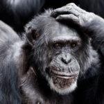 Die intelligentesten Tiere der Welt