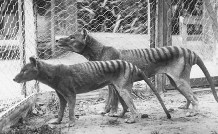 10 vom Menschen ausgerottete Tiere